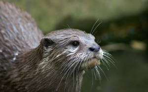 Since we don't tell you anything about The Unknown, here's an otter.